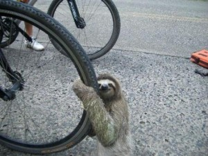 "I'm constantly amazed by what you can find on the Internet, but who would have though ""sloths on bikes"" would return so many hits!"